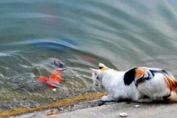 男人公园鱼池旁游玩发现一只猫咪鬼头鬼脑接下来让人出人意料