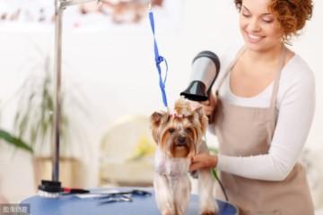 每次帮狗狗洗澡都像在交兵但送美容店洗又很贵该怎么办
